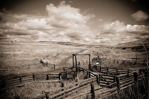 Fences by Heather Binns
