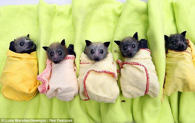 Baby bats 1